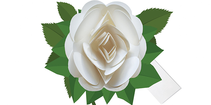 rose-day-your-first-step-to-love-week-white-rose