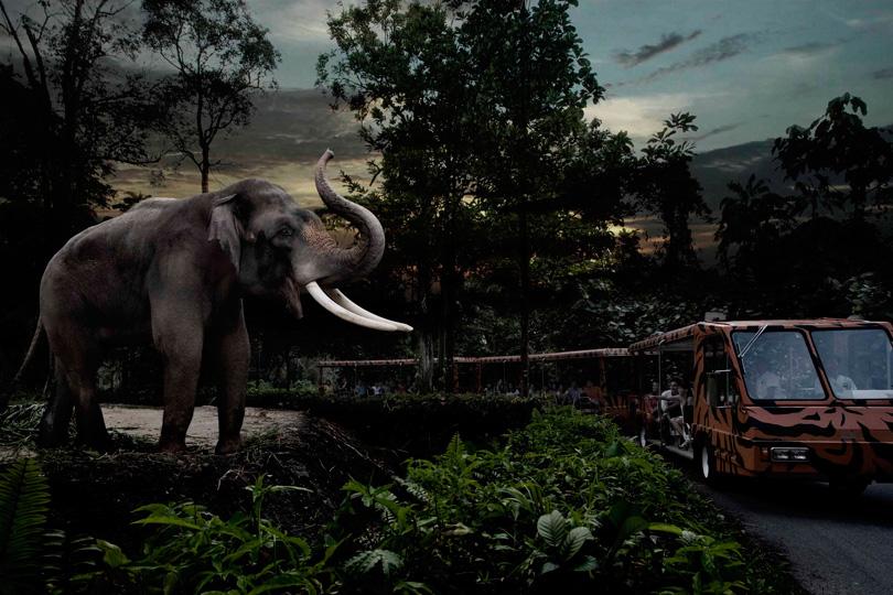 Singapore Night Safari