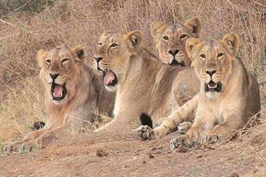 Ambardi Safari Park Dhari